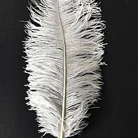 Ostrich Feather - White - 24""