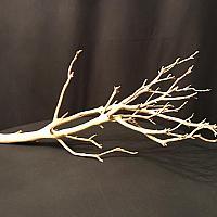 "Manzanita Branch - 18"" - 24"""