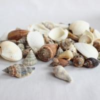 Vase Filler - Seashells - Bin