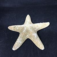 "Starfish - Sugar 5""- 6"""