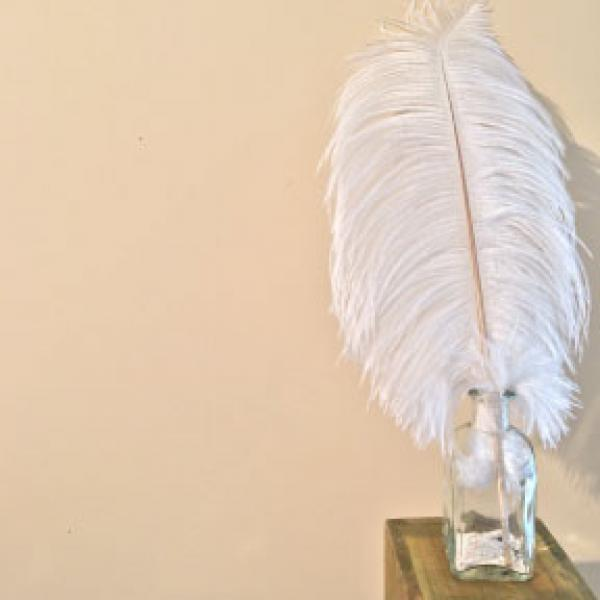 "Ostrich Feather - 18"" - 20"""